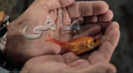 the-fish-film-from-iran-filmminute